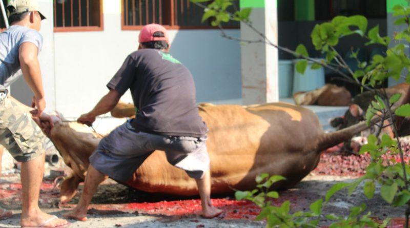 Bungkus Daun Untuk Daging Kurban (5)